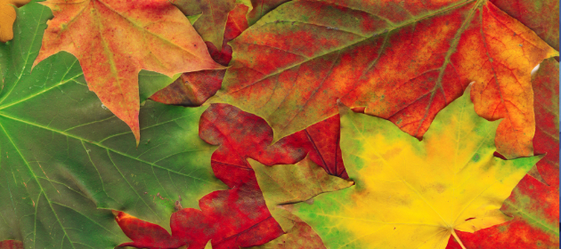 Autumn Publicity Fundamentals