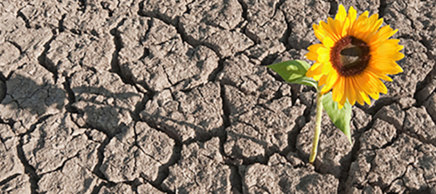 Flower Growing Out of Dry Earth