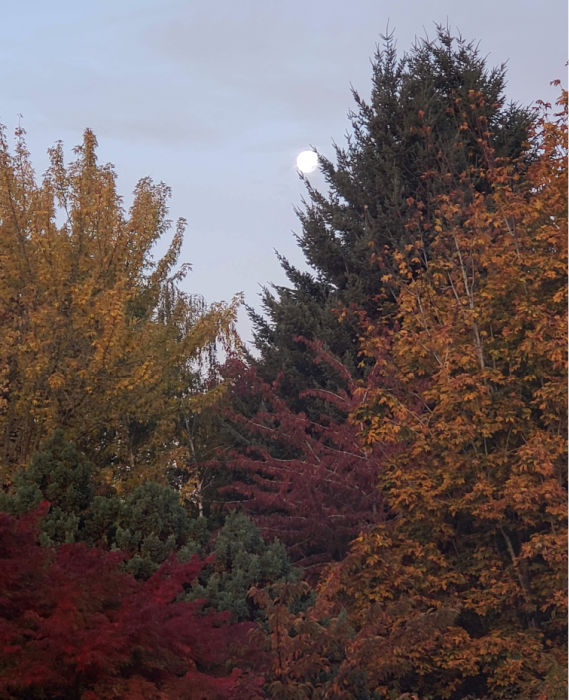Moon and fall leaves turning