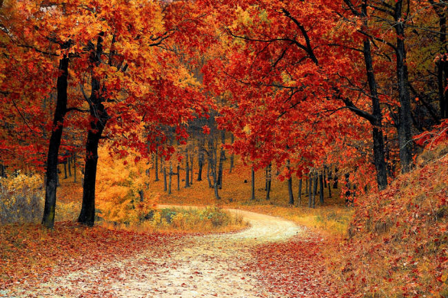 Fall colors along winding path