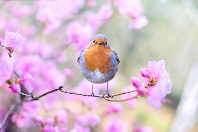 Determined bird of spring